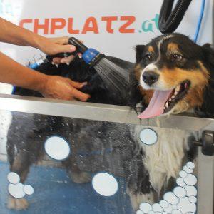 Pflege- und Flohspülung in der Hundewaschbox