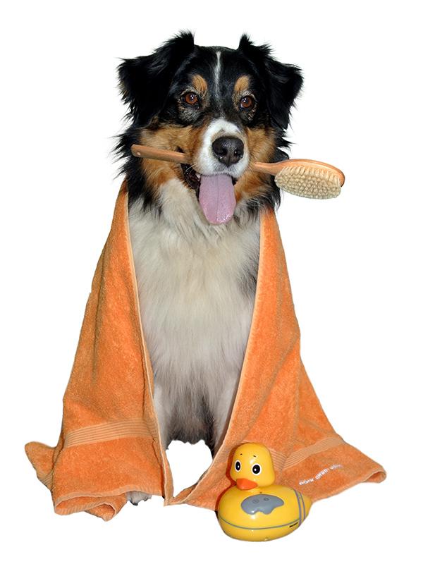 Hund mit Bürste, Badetuch und Quietschente auf Mein Waschplatz