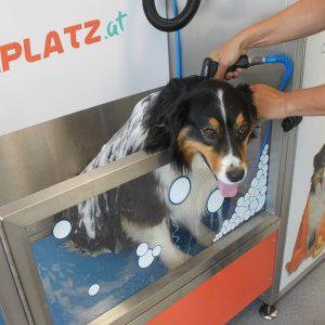Hunde-Shampoo in der Hundewaschbox